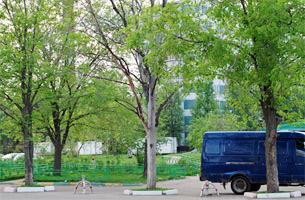 tree_2_1mkr