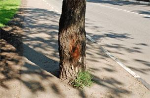tree_pol